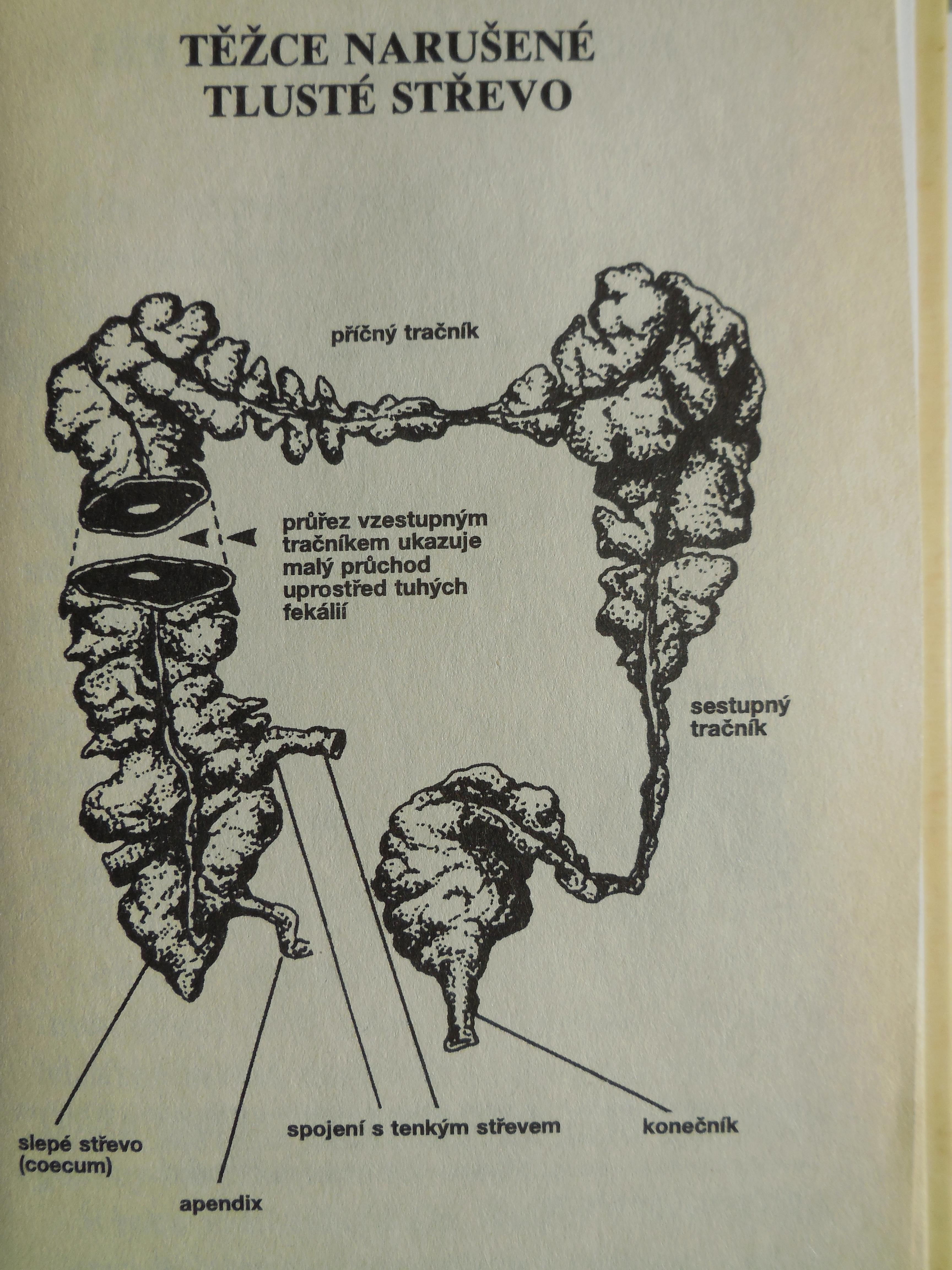 Všimněte si průřezu tlustého střeva