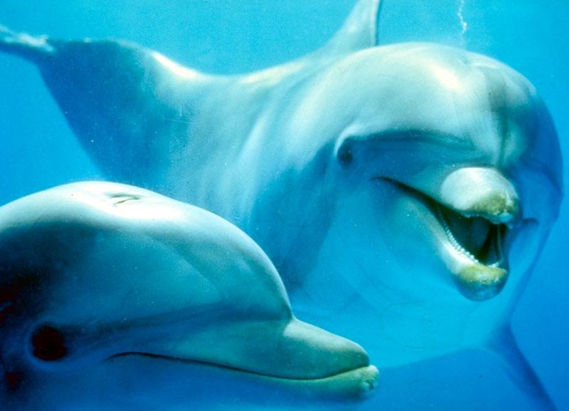 delfín 3