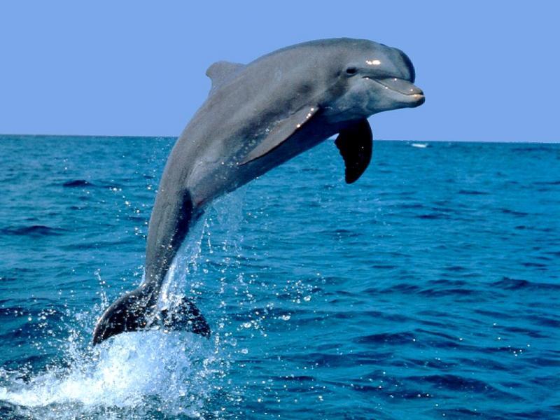 delfín 4