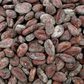 Kakaové boby madagaskar nové